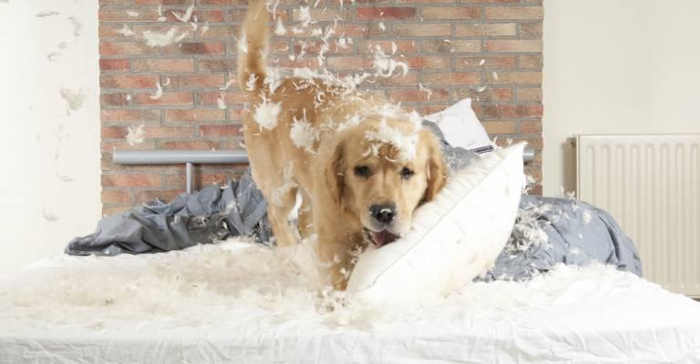 Aansprakelijkheid hond maakt bed kapot